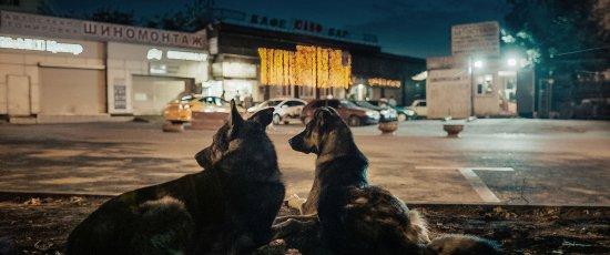 Zwei Hunde liegen nebeneinander auf der Straße mit dem Rücken zu Kamera und schauen auf eine Straße.