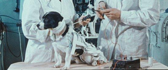 Ein Hund sitzt auf einem Untersuchungstisch mit Kabeln und Maschinen am Körper. Zwei Ärzte untersuchen ihn.