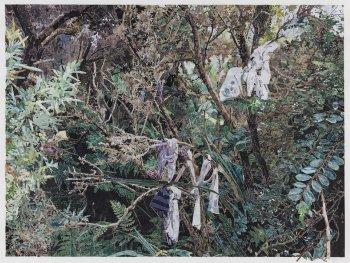 Die Collage von Marcel Odenbach zeigt ein dichtes Gestrüpp vor einem Waldrand.
