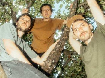 Die drei Bandmitglieder im Baum sitzend