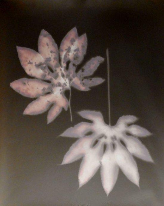 Fotogramm von zwei Blättern